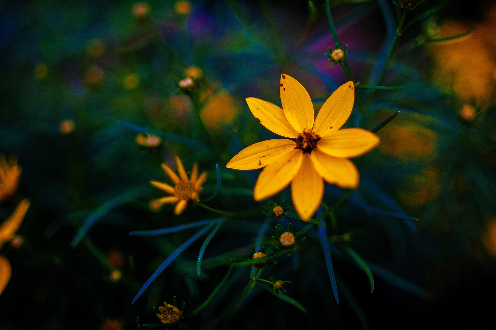 Flowers Photography By Sean Rose